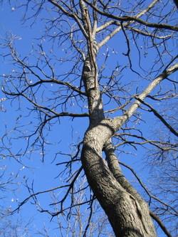 Mysterypot_tree_ls_228