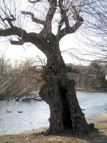 Mystery_tree_321