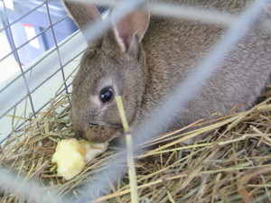 Bunny_322
