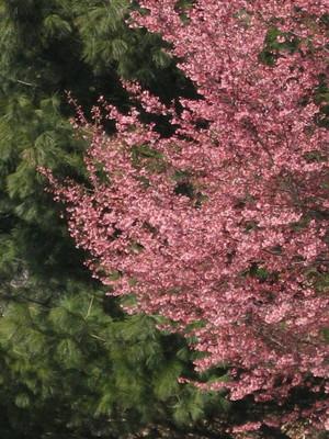 Pinktree_326