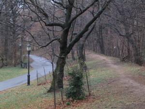 Path_331