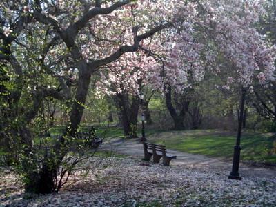 Magnolia_falls_422