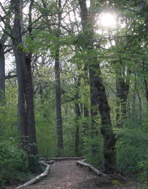 Woodsy_path_425