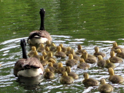 Prospect A Year In The Park Honk If You Love Mom